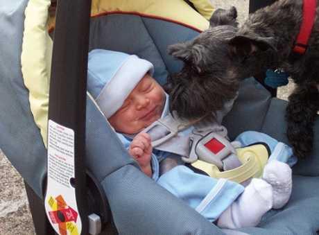 Las mascotas llegada bebé