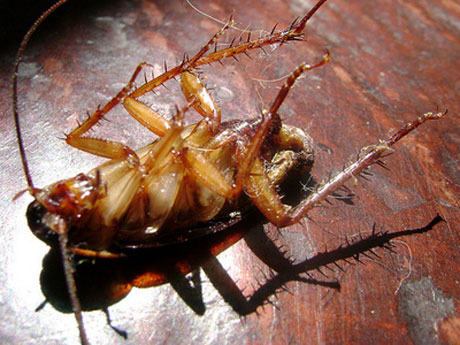 como evitar las cucarachas en el hogar