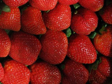 comprar fresas