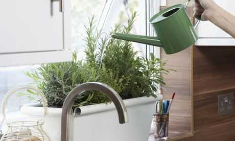 Cómo cultivar las plantas aromáticas
